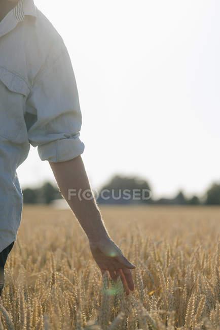 Close-up do homem em um campo que toca em orelhas do trigo — Fotografia de Stock