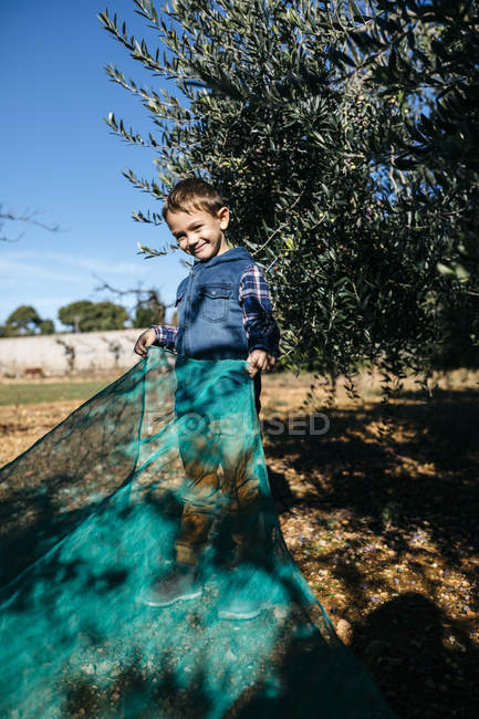 Boy helping during olive harvest in orchard — Stock Photo
