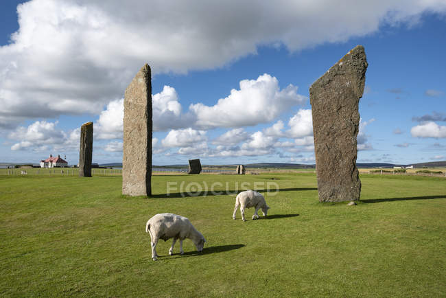 Great Britain, Scotland, Orkney, Mainland, Neolithic stone circle — Stock Photo