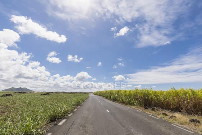 Маврикий, дороги, поля сахарного тростника — стоковое фото