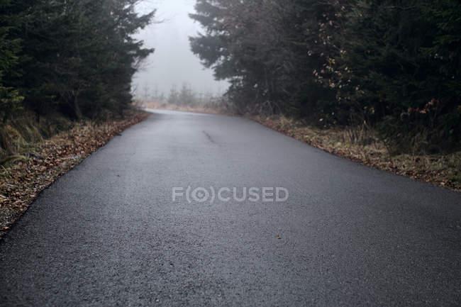 Болгария, мокрый асфальт после дождя через лес — стоковое фото