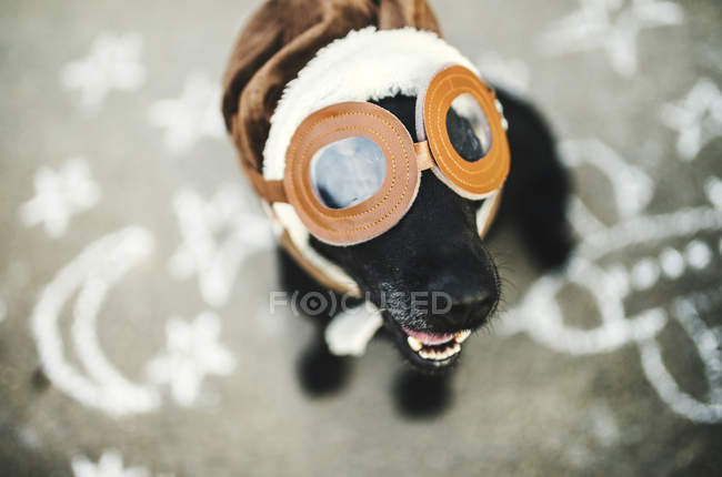 Portrait of black dog wearing flying goggles and hat — Stock Photo