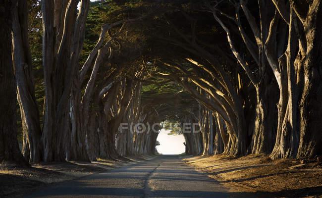 Estados Unidos, California, Inverness, Camino arbolado por la noche - foto de stock