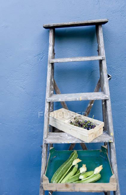Scala, cesto con uva blu, scatola con zucchine e fiori — Foto stock