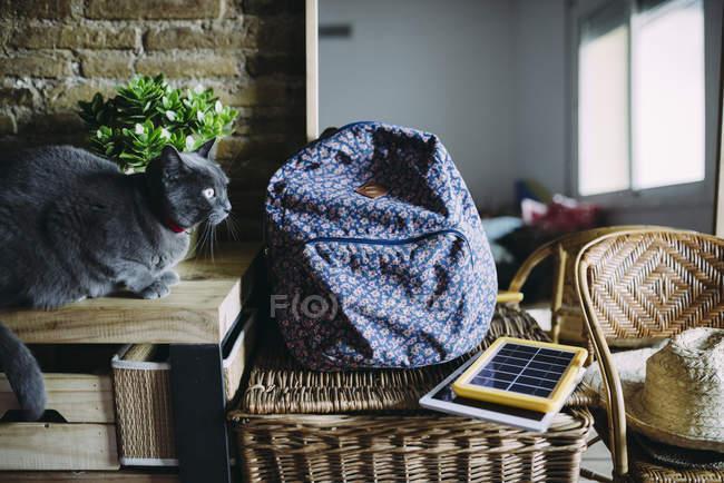 Russische blaue Katze neben einem Rucksack, Solarpanel Ladegerät, Tablet und Pflanze — Stockfoto