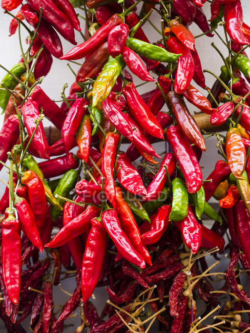 Chili pods growing on house facade — Stock Photo