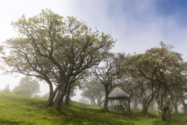 Reunion, Reunion National Park, Route du volcan, picnic place — Stock Photo