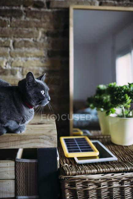 Russische blaue Katze neben einem Solarpanel Ladegerät, Tablet und Pflanze — Stockfoto