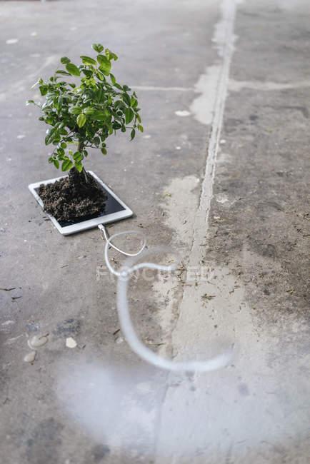 Pequeño árbol creciendo en tableta digital - foto de stock