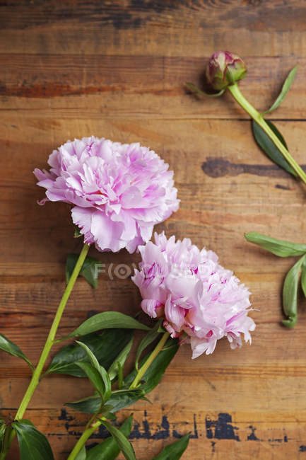 Pink peonies on wooden background — Stock Photo