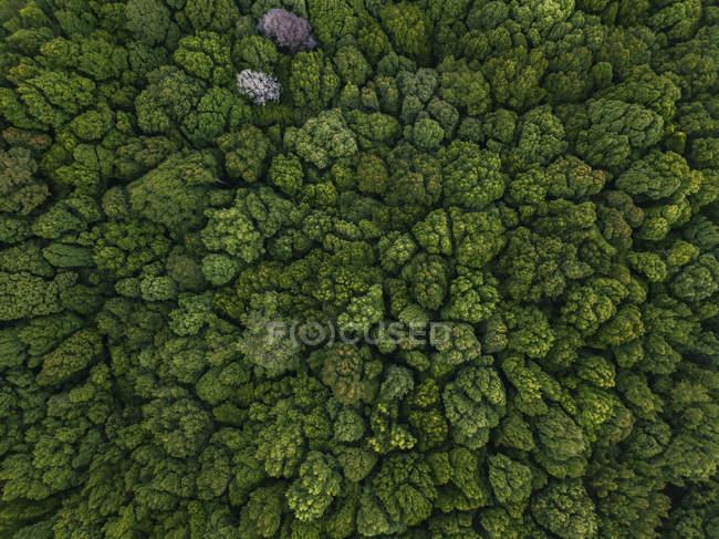 Індонезія, Балі, Бедуґул, Bali ботанічний сад — стокове фото