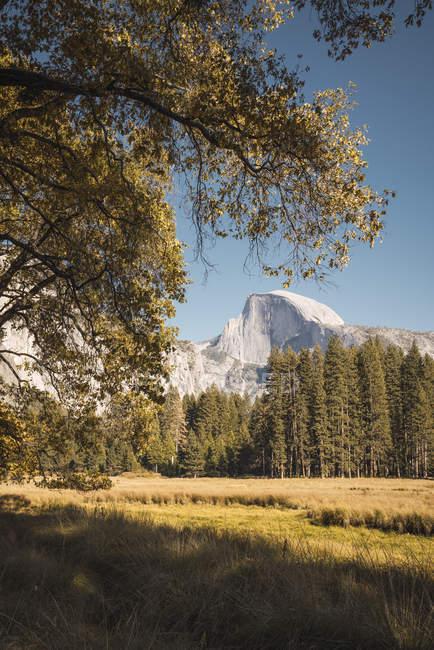 USA, California, Yosemite National Park, landscape with El Capitan in background — Stock Photo