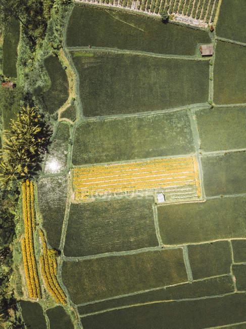 Indonésie, Bali, Vue aérienne des rizières d'en haut — Photo de stock