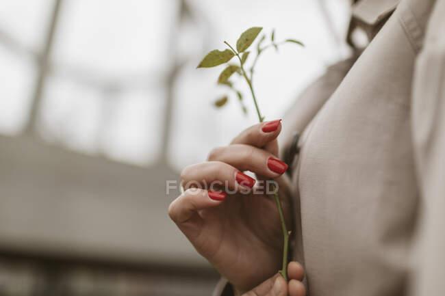 Mãos segurando galho, close-up — Fotografia de Stock