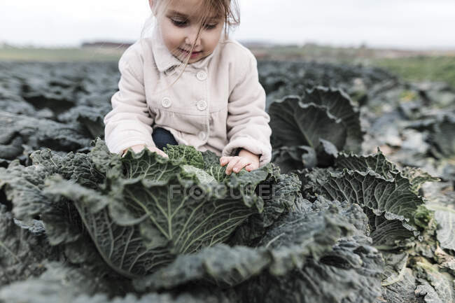 Girl sitting in a cabbage field — Stock Photo