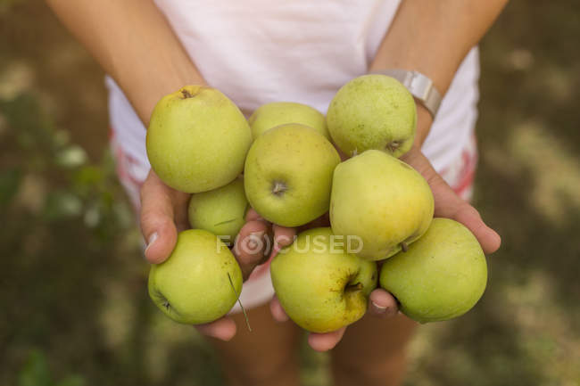 Woman holding harvested apples — Stock Photo