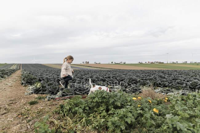 Fille jouant avec un chien dans un champ de choux — Photo de stock