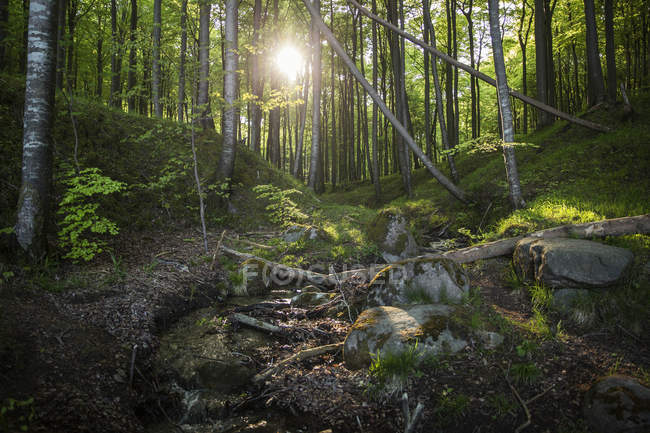 Allemagne, Mecklembourg-Poméranie occidentale, Ruegen, Parc national de Jasmund, forêt de hêtres — Photo de stock