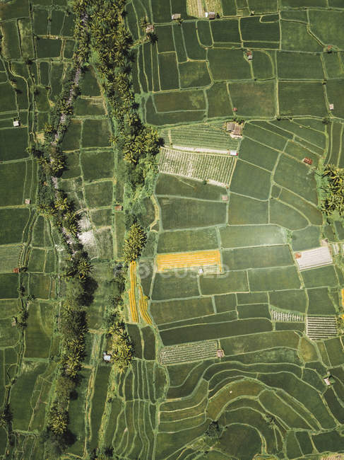 Indonesia, Bali, Vista aérea de los campos de arroz desde arriba - foto de stock