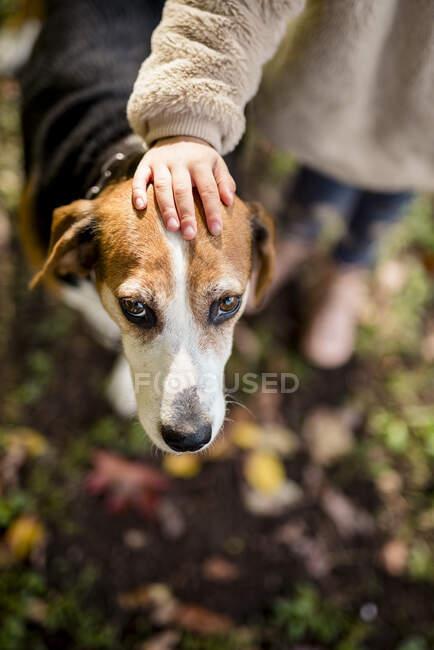 Mão menina na cabeça do cão no jardim outonal — Fotografia de Stock