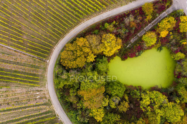 Germania, Baden-Wuerttemberg, Veduta aerea di Korber Kopf, vigneti in autunno — Foto stock