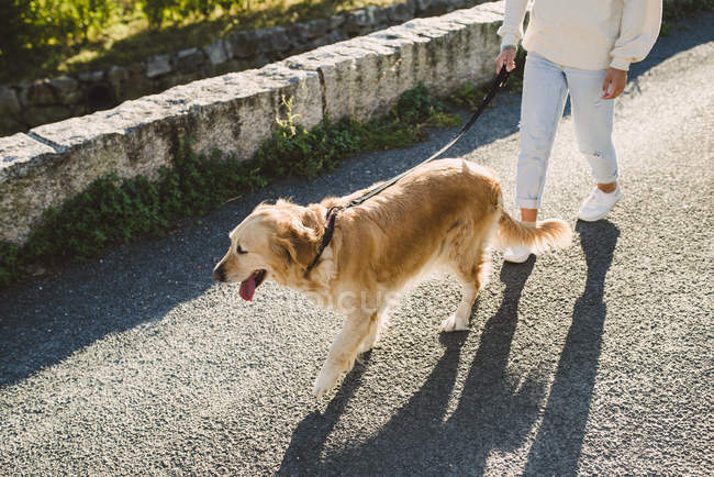 Woman walking with her golden retriever dog on a road — Stock Photo