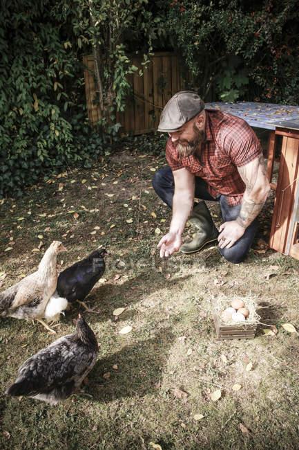 Uomo barbuto nel proprio giardino con galline gamma, piccola scatola di legno con uova su prato erba — Foto stock