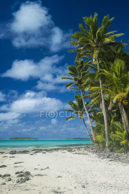Острови Кука, Раротонга, Лагуна, Таютакі, пляж з білим піском і Палм-Біч — стокове фото