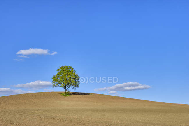 Single tree in a field, Bavaria, Germany — Stock Photo