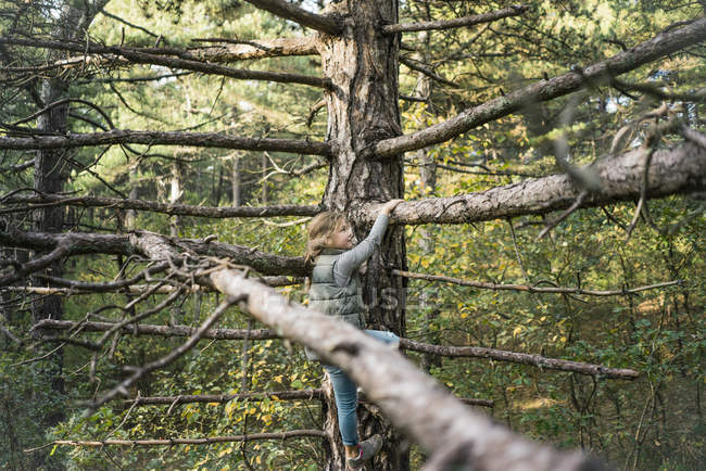 Little girl climbing in the trees — Stock Photo