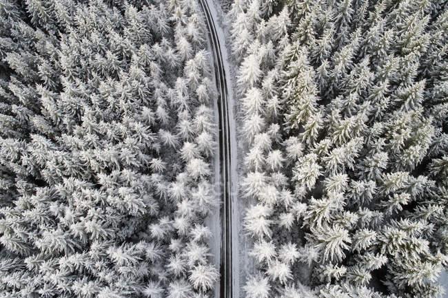 Шотландия, снег на соснах, пустая дорога — стоковое фото