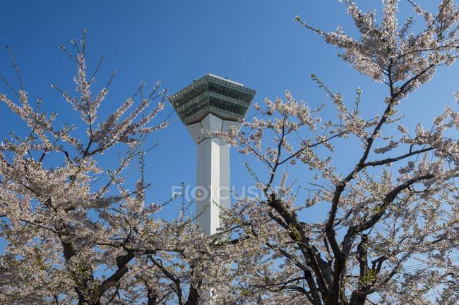 Форт Горйоaku, перегляд платтформ і вишневого дерева цвітіння — стокове фото
