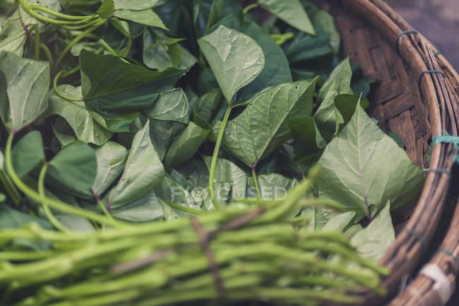 Vietnam, fresh vegetables and herbs in basket — Stock Photo