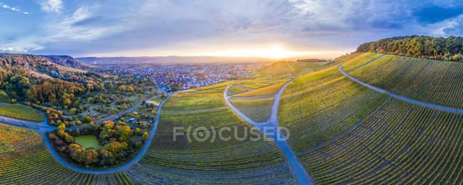 Germania, Baden-Wuerttemberg, Veduta aerea di Korber Kopf, vigneti al tramonto in autunno, panorama — Foto stock