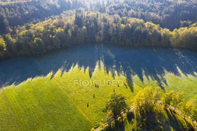 Germania, Alta Baviera, Veduta aerea delle mucche al pascolo al mattino d'autunno — Foto stock