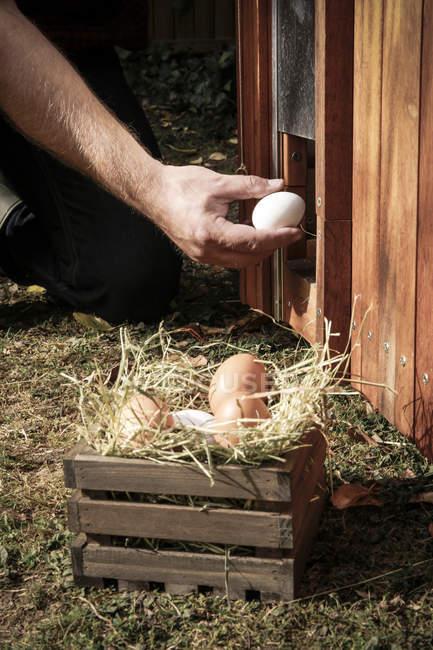 Фермер людини тримає яйце — стокове фото