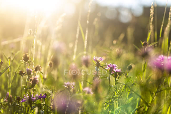 Summer meadow at evening twilight — Stock Photo