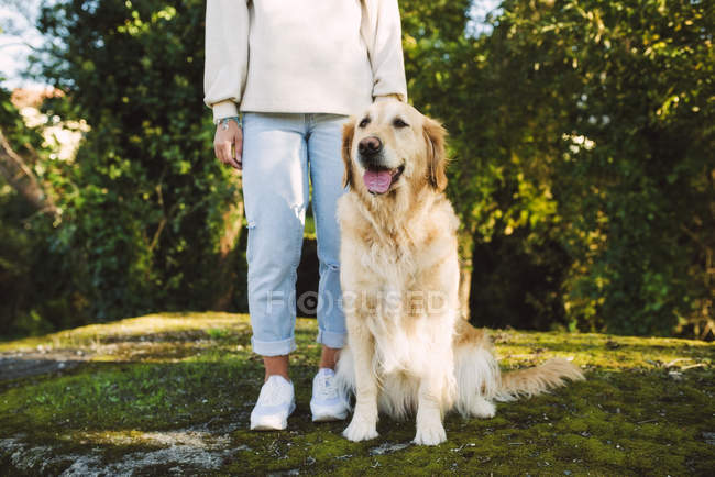 Woman next to Golden retriever dog sitting on a meadow — Stock Photo