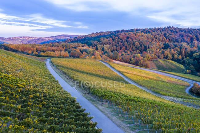 Alemania, Baden-Wuerttemberg, Vista aérea de Korber Kopf, viñedos en otoño - foto de stock