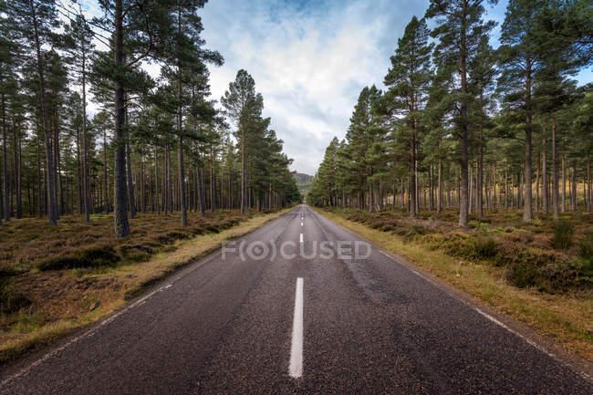 Великобритания, Шотландия, Браемар, дорога через сосновый лес — стоковое фото
