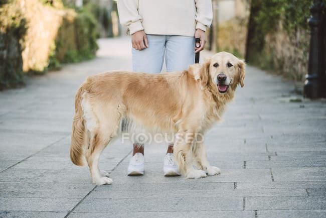 Femme avec son chien golden retriever sur un chemin — Photo de stock