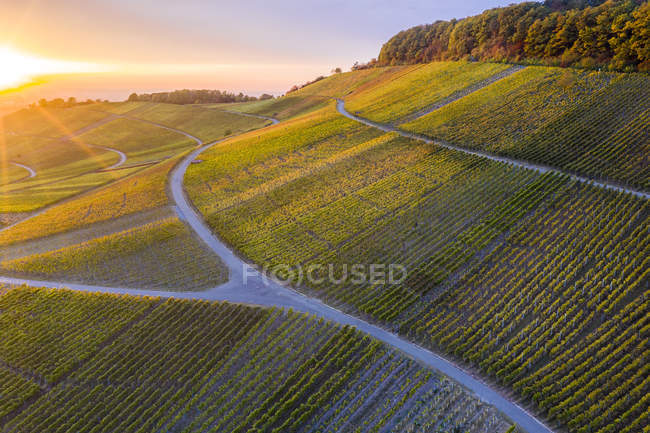 Germany, Baden-Wuerttemberg, Aerial view of Korber Kopf, vineyards at sunset in autumn — Stock Photo