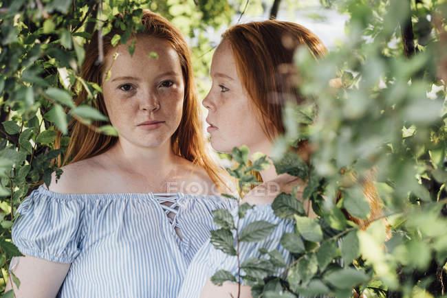 Червонячи близнюки на дереві — стокове фото