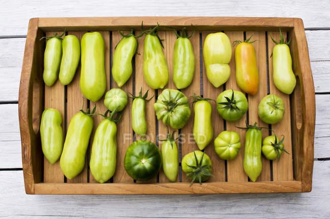 Трей с различными помидорами, стадия спелости, незрелые — стоковое фото