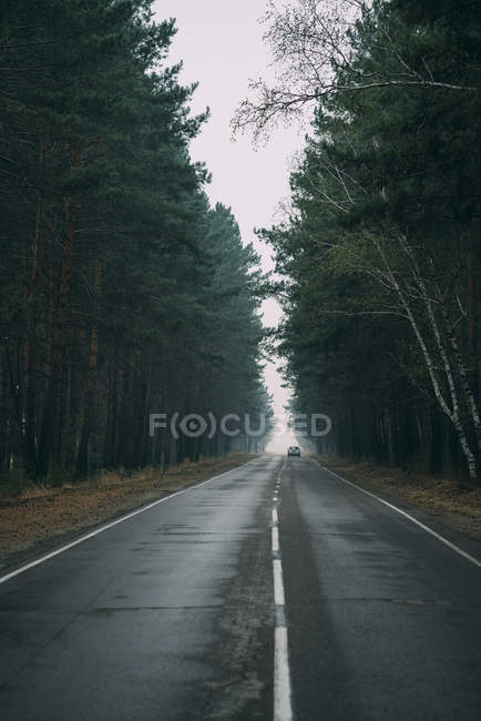 Back view of car driving on country road through pine forest — Stock Photo