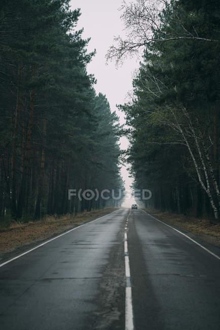 Vista posteriore della guida auto sulla strada di campagna attraverso la pineta — Foto stock