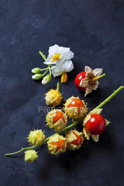 Tomates y flores pegajosas de la sombrilla en terreno oscuro - foto de stock