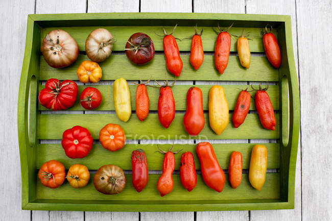 Wooden tray with various tomatoes, stage of ripeness, overripe, moulding — Stock Photo