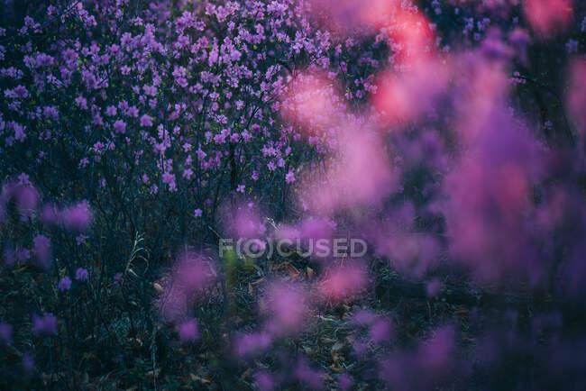 Прекрасний квітучий образ. — стокове фото
