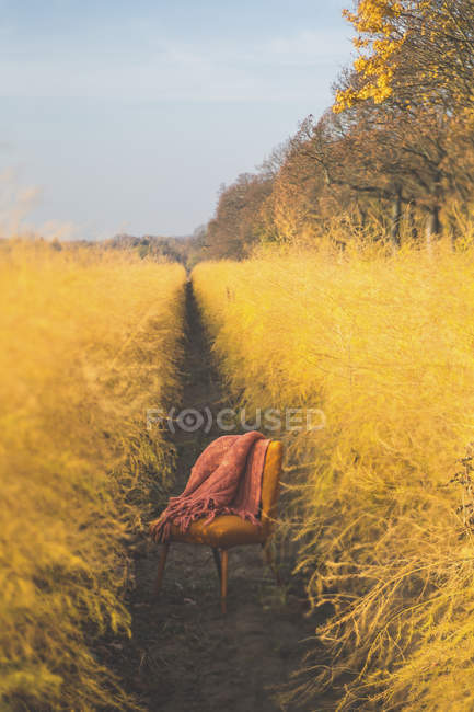 Orange chair in asparagus field in autumn — Stock Photo